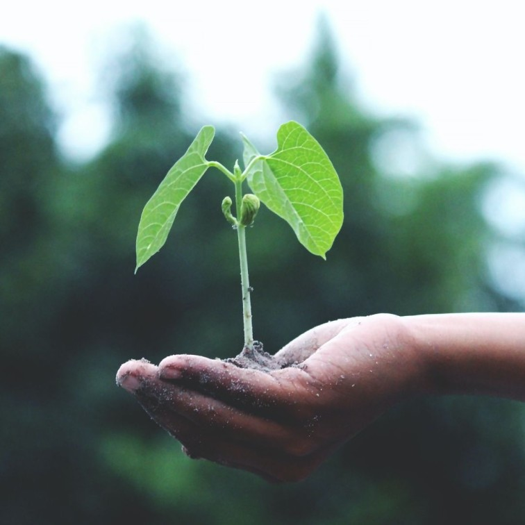 Go Green: Why Sustainability and Digitization go Hand-in-Hand